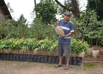 Saiman Nur Soim alias Kromo menunjukan durian Kromo yang menjadi durian unggulan Kabupaten Banyumas. (Istimewa)