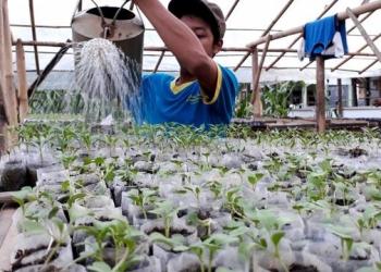 Ponpes Rubat Mbalong Ell Firdaus memanfaatkan pupuk organik cair dari air liur untuk menyiram bibit tanaman.