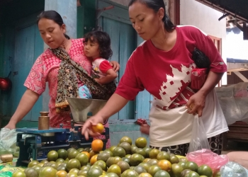 jeruk cilacap