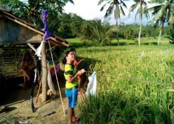 USIR BURUNG: Anak-anak petani di Desa Ajibarang Kulon, Kecamatan Ajibarang mengusir burung di lokasi persawahan desa setempat kemarin.