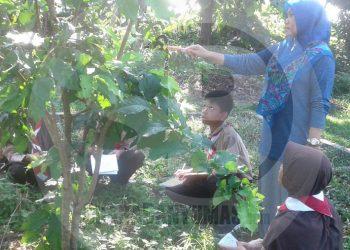PEMBELAJARAN DI LUAR KELAS :Sejumlah siswa di salah satu SMP di Kabupaten Banyumas mengikuti kegiatan pembelajaran di luar kelas dengan didampingi guru, baru-baru ini.(60) (SM/Budi Setiawan)