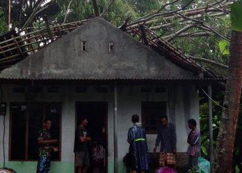 TERTIMPA POHON: Rumah warga Desa Ciklapa, Kecamatan Kedungreja, Kabupaten Cilacap yang tertimpa pohon, Sabtu (1/2).(SM/dok)