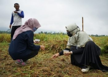TEKNOLOGI SUPERBODI : Faperta Unsoed Purwokerto bersama petani Desa Wlahar Wetan memperaktikkan secara langsung pola tanam dengan teknologi siperbodi. (dok/Unsoed)
