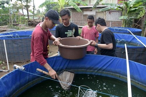BUDIDAYA LELE:Sejumlah santri melakukan budidaya ikan lele dengan sistem bioflok di pesantren An Najah Purwokerto, beberapa waktu lalu.(SB/Dian Aprilianingrum)