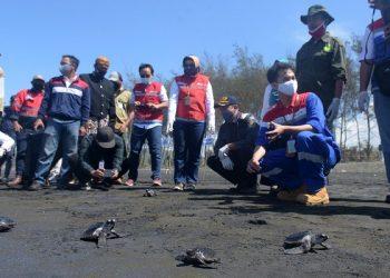 PELEPASAN TUKIK: Ratusan tukik dilepasliarkan oleh PT Pertamina MOR IV dan masyarakat di Pantai Sodong, Adipala, Cilacap, Senin (14/9). (SB/Dian Aprilianingrum)