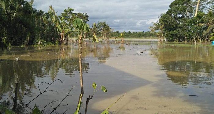 Debit air di areal persawahan tempat korban ditemukan cukup tinggi. (SB/dok)